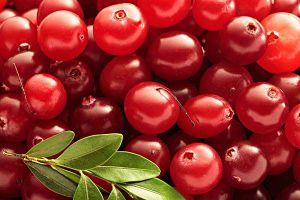 Cranberry Juice Powder for Beverage and Food Flavor pictures & photos