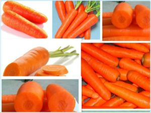Yellow and Fresh Sweet Carrot From China pictures & photos