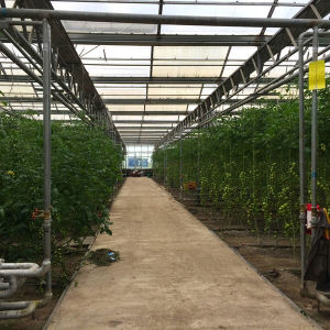 Cheap & Hot Agriculture Greenhouse Film/Greenhouse Plastic Cover pictures & photos