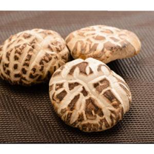 5.5cm up Dried Shiitake Mushroom, Dehydrated White Flower Mushroom pictures & photos