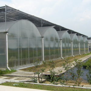 Large Scale Commercial Polycarbonate Greenhouse pictures & photos