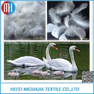 High Quality2~4cm or 4~6cm White Goose Feather for Sale pictures & photos