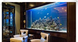 Customized Glass Fish Tank pictures & photos