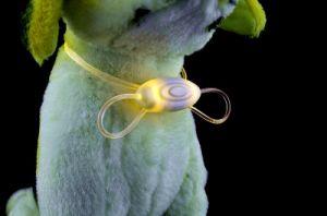Seven Color LED Lace Bowknot Fashion Simple Pet Collar pictures & photos