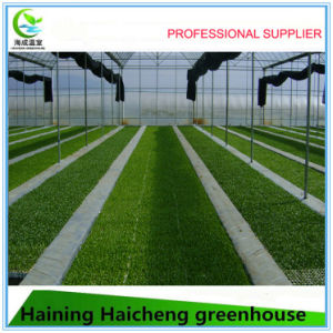 Economical Multi-Span Film Greenhouse for Vegetable Growing pictures & photos