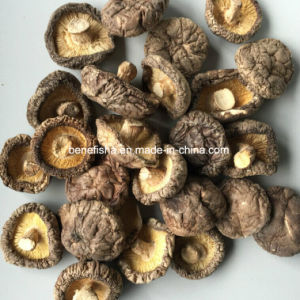Dried Mushroom Black Surface (Middle thick) pictures & photos