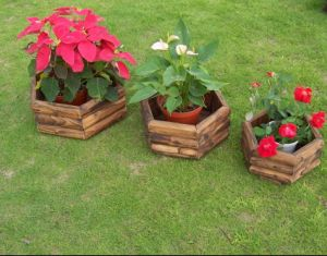 Hexagonal High Quality Planter with Unique Design pictures & photos