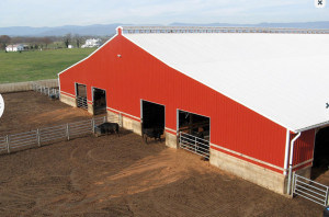 Steel Structure Cowshed/Stable (SSC-142) pictures & photos