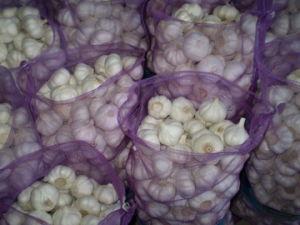 Pure White Garlic in 5kg/10kg/20kg Mesh Bag Packing