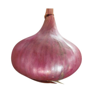 4-7cm Red Onion pictures & photos