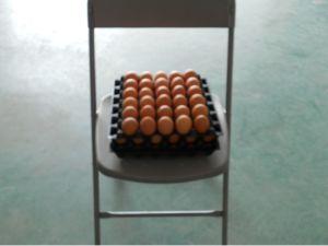 Egg Bracket