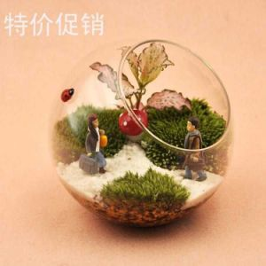 Glassware Terrarium Crafts Glass Vase Apple pictures & photos