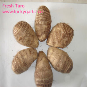New Crop Fresh Chinese Taro for Exporting pictures & photos