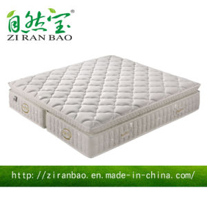 Enjoyable Latex Foam Hotel Pocket Spring Mattress (ZRB-816)