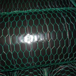 PVC Coated and Galvanized Chicken Coop Wire Netting pictures & photos