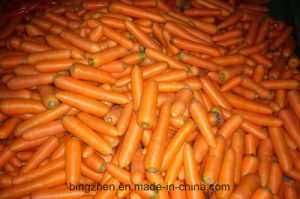 Hot Sale! China Wholesales Fresh Vegetables Carrot pictures & photos