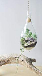 Hot Selling Hanging Succulent Glass Garden Planter pictures & photos