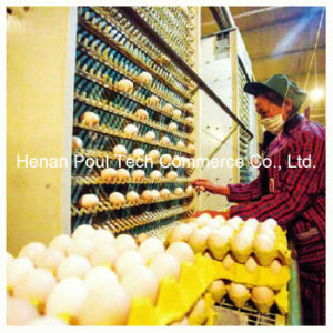 Automatic Egg Collection Machine pictures & photos