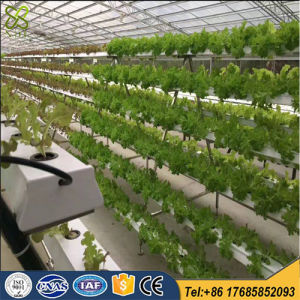 Hot Dipped Galvanized Glass Greenhouse for Hydroponic Systems pictures & photos