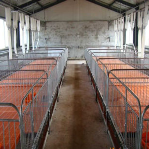 Piglet Nursery Bed and Care Beds for Pig Industry pictures & photos