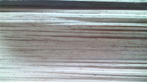 18mm Eucalyptus Hardwood Plywood - Mr Glue - Construcion Plywood