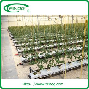 Commercial hydroponics system for tomato crop pictures & photos