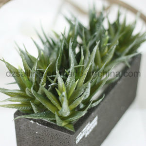 Decorative Plant Natural Touch Artificial Succulents Artificial Flower (SW17673) pictures & photos