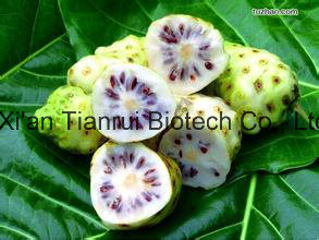 100% Natural of Noni Fruit Powder /Noni Jucie Powder /Noni Extract Powder pictures & photos