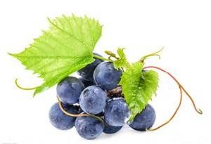 Grape Seed Extract OPC pictures & photos