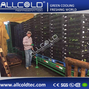 Iceburg Lettuce Vacuum Cooling Machine