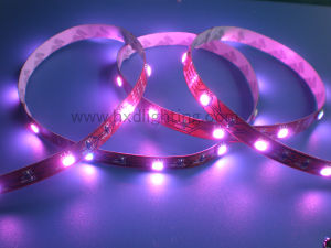 LED Stripe Light/ SMD2835 Stripe/ Flexbile LED Bars pictures & photos