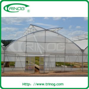 Gutter Connected Greenhouse for Hydroponics Vegetable pictures & photos