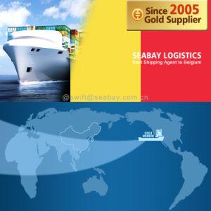 Competitive Ocean / Sea Freight to Belgium From China/Tianjin/Qingdao/Shanghai/Ningbo/Xiamen/Shenzhen/Guangzhou pictures & photos