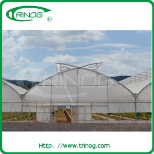 Commercial Film Greenhouse in steel structure pictures & photos