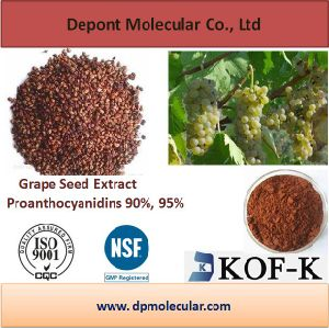 Factory Supply Natural Grape Seed Extract 95% Proanthocyanidins (OPC) pictures & photos
