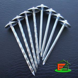 Roofing Nail/Umbrella Nail/Nail/Galvanized Roofing Nails with Umbrella Head