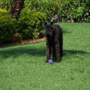 Special Design Cheap Artificial Lawn Popular Grass pictures & photos