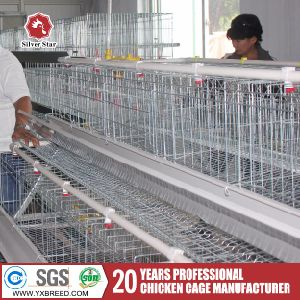 Silver Star Above 95% Egg Production Chicken Battery Cage Design pictures & photos