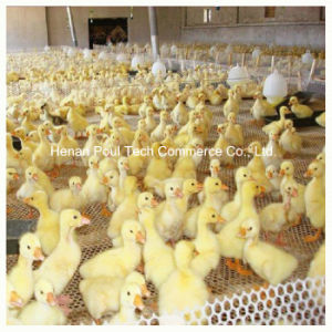Chicken Farm Use Chick Floor pictures & photos