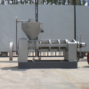 USA Hot Demand 20ton/Day Oil Press (6YL-165) pictures & photos