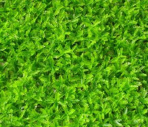 Plastic Green Moss Artificial Fence for Balcony Decoration (MW16036) pictures & photos