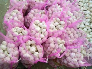 Fresh Crop Marketable White Garlic pictures & photos
