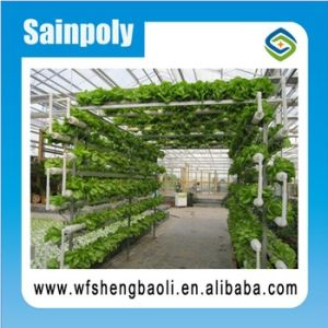 Hydroponics System for Agriculture Film Greenhouse pictures & photos