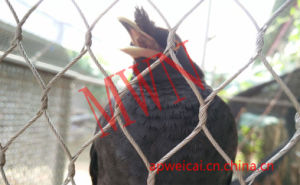 Small Bird Cages Mesh Netting pictures & photos