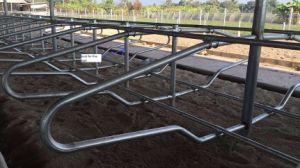Cattle Farm Free Stall