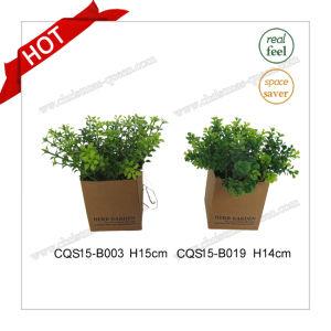 H14cm Plastic Material Muticolour Artificial Plant Silk Flowers pictures & photos