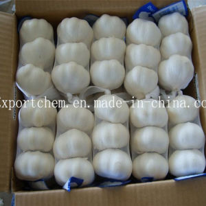 New Crop Fresh Normal White Garlic / Fresh Garlic, pictures & photos