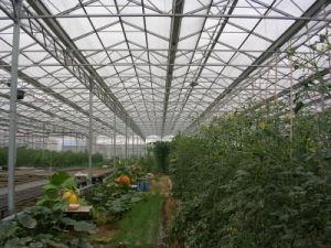 Venlo Making Warmhouse/Greenhouse Use Galvanized Steel Tube PC Cover