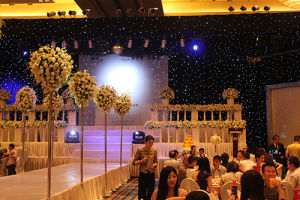 LED Star Curtain Light / LED Star Clothes (RG-G25) pictures & photos