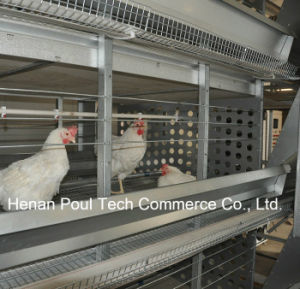 Poul Tech Hot Sale Breeder Chicken Cage (H Frame) pictures & photos